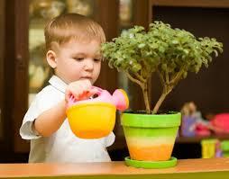 Полезные домашние растения для детской комнаты – правила озеленения