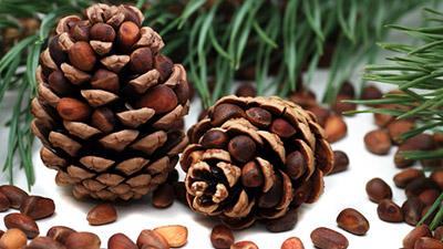 кедровые орехи: польза