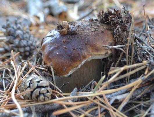 Видеть во сне белые грибы — знак, обещающий долголетие.