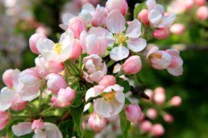 Растения-обереги: защита и привлечение удачи