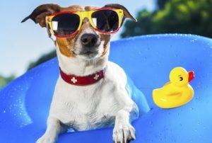Как защитить собаку в жару: 8 практических рекомендаций