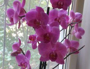 Как ухаживать за орхидеей после того, как она отцвела