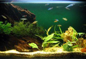 Как ухаживать за аквариумом и рыбками для начинающих