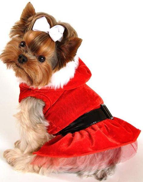 как заработать на одежде для собак
