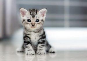 Как можно назвать кота мальчика