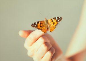 К чему снится бабочка во сне