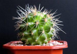 10 самых неприхотливых комнатных растений