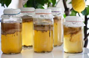 Как ухаживать за чайным грибом в домашних условиях