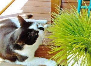 Как отучить кошку грызть цветы в горшках