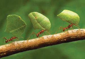 К чему снятся муравьи женщине во сне